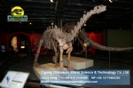 Artificial Dinosaur skeleton replica ( Shunosaurus ) DWS002